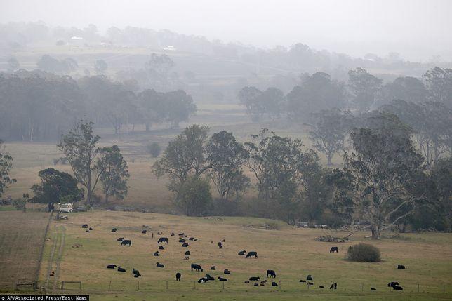 Australia. W końcu pojawił się deszcz