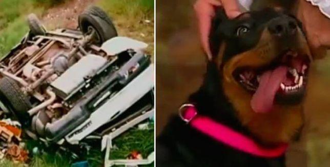 Po wypadku pies spędził 13 dni przy wraku samochodu