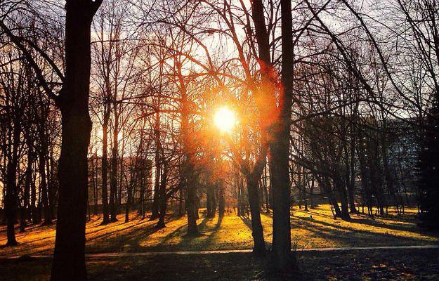 Protesty nie pomogły. Trwa wielka wycinka drzew w Parku Śląskim