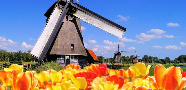 Holandia czeka na Polaków, ile można zarobić?