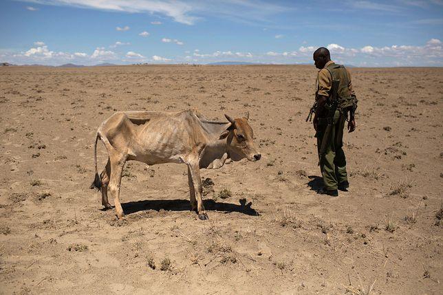 Tak może wyglądać koniec świata. Postępująca degradacja środowiska przyniesie ogromne katastrofy