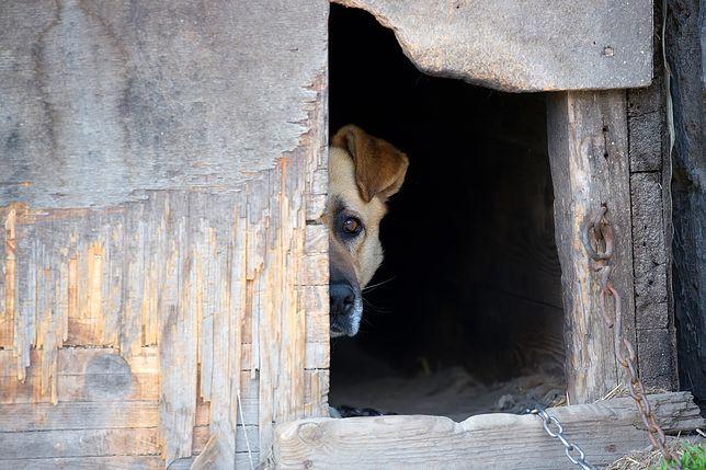 Odebrany pies żył w skandalicznych warunkach (zdjęcie ilustracyjne)