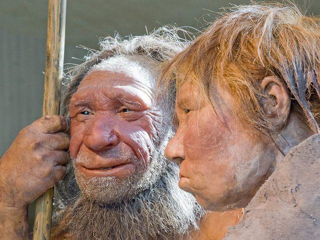 Neandertalczycy mieli wspólne geny z mamutami