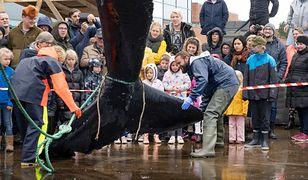 Wieloryb z Tamizy nie żyje