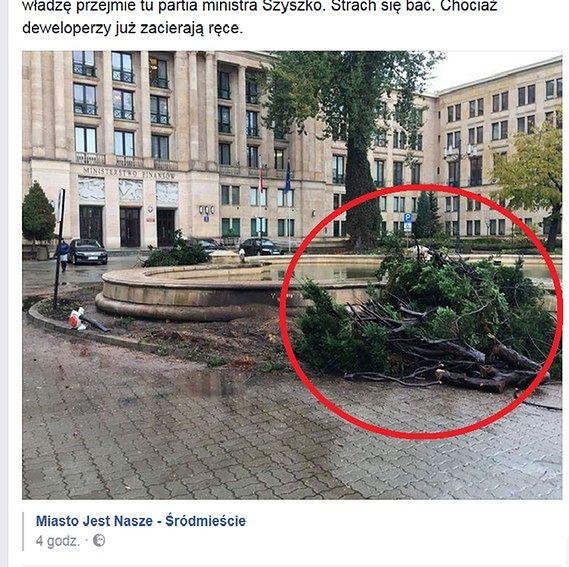 """Stare drzewa powalone przed Ministerstwem Finansów. """"Stan zdrowotny krzewów nie był dobry"""""""