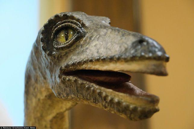 Wyginięcie dinozaurów. Najnowsze odkrycie naukowców z USA