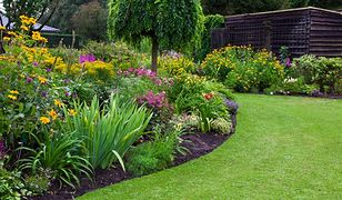Pielęgnacja trawnika latem. Koszenie trawy to nie wszystko