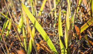 Reaktywacja trawnika po zimie. Wiosenne porządki w ogrodzie