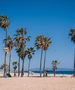 W Świnoujściu wyrosną palmy. Budowa deptaku opóźnia się