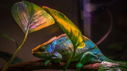 Firefox jak kameleon. Rozszerzenie zmieni User Agent i utrudni śledzenie