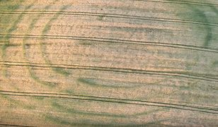 Tajemnicze kręgi w zbożu pod Oławą. To ślady potężnej konstrukcji sprzed 7 tys. lat