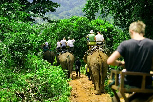 Zwiedzanie okolicy na grzbiecie słoni to popularna atrakcja w egzotycznych krajach