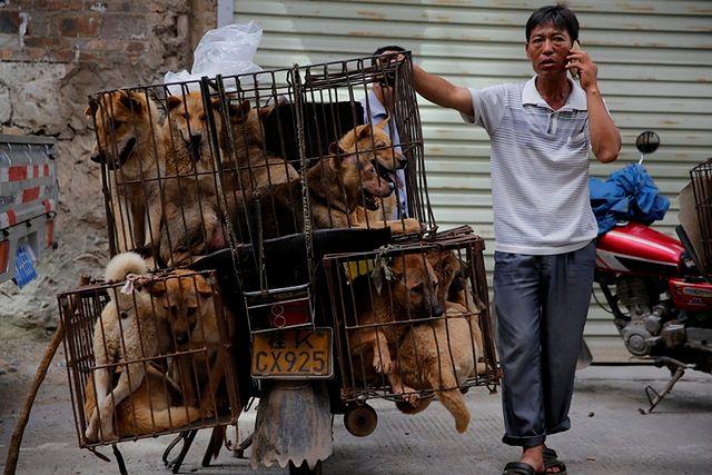 Każdego roku zabijanych jest podczas festiwalu kilka tysięcy psów