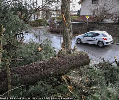 Wiatr w Polsce łamał drzewa i zrywał trakcje. Strażacy minionej nocy interweniowali ponad tysiąc razy.