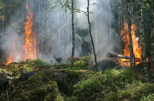 Statystyki leśników i policjantów nie pozostawiają złudzeń: dziewięć na 10 pożarów lasów wywołują ludzie