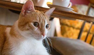Warszawa. Kawiarnia dla wielbicieli kotów bez rządowego wsparcia. Odzew internautów