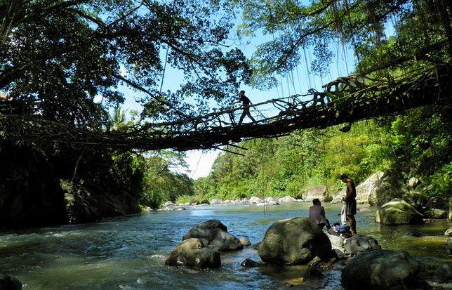 Most Jembatan Akar naprawdę żyje!