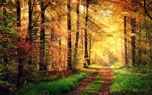 Gdzie najlepiej podziwiać złotą polską jesień?