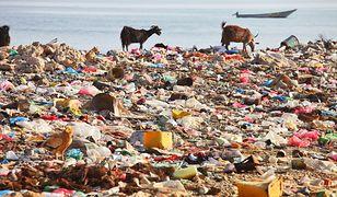Śmieci stają się plagą mórz i oceanów