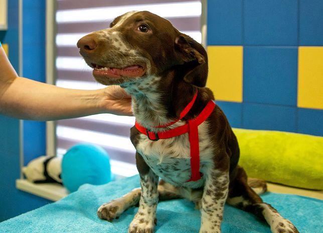 Fijo będzie miał w nowym domu dwóch psich towarzyszy
