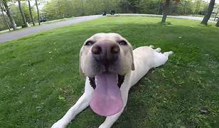Oto Stella, najszczęśliwszy pies na świecie. To wideo podbiło serca internautów