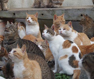Czy zastanawiałeś się kiedyś dlaczego twój kot mruczy?