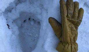 Wielki ślad łapy na śniegu. Ratownicy GOPR apelują o czujność