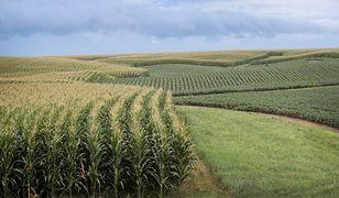 Naukowcy donoszą: GMO jest koniecznością, żeby wykarmić planetę