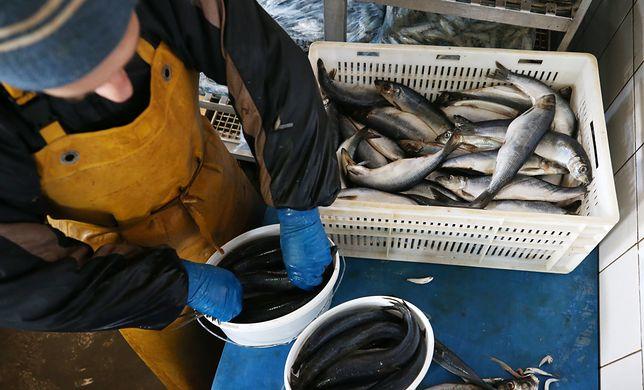 Przetwórcy ryb skarżą się na ograniczenia w dostępie do surowca(Photo by Sergei Malgavko\TASS via Getty Images)