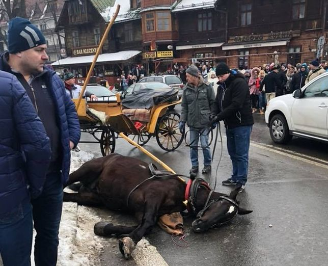 Przerażony koń biegł przez Krupówki. Staranował małe dziecko