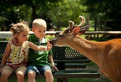Zoo w Gdańsku znów otwarte. Odwiedzających czekają zmiany