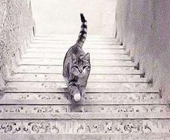 Test obrazkowy. Kot wchodzi po schodach czy schodzi?