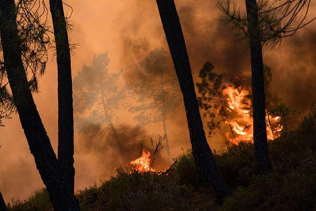 Pożar lasów w Czarnogórze. To wina Polaka