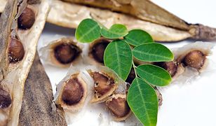 Moringa  - superfood prosto z Azji. Zaskakuje skutecznością
