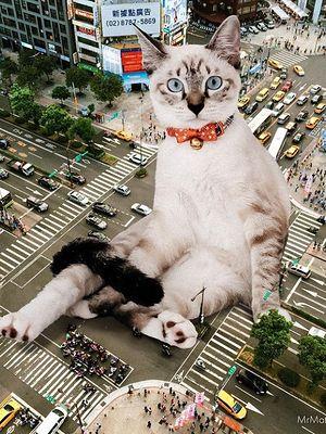 Dzień Kota już dziś! Kocie profile, które warto obserwować