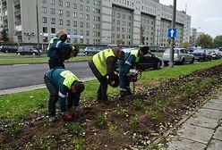 Praga Południe zakwitnie. Trwa wielkie sadzenie krzewów