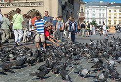 Zagrożeniem dla polskich zabytków są… ptaki. Stanowią coraz większy problem