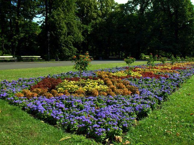 Miasto sadzi kwiaty, a mieszkańcy je kradną...