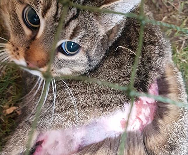 Majka - kotka nadal czeka na adopcję.