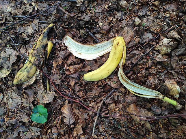 Skórki od bananów czy ogryzki od jabłka mogą stanowić zagrożenie w lasach