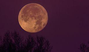 Różowy Księżyc. Jeszcze w kwietniu pierwsza w tym roku superpełnia