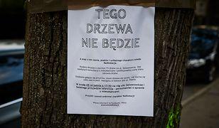 Łódź: aleja jesionów ma przestać istnieć. Wyciętych ma zostać ponad 70 drzew