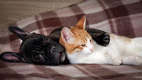 """Adoptuj przyjaciela z Na4Łapy – aplikacją """"randkową"""" dla psów i kotów ze schroniska"""
