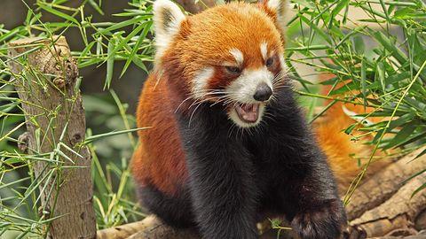 Firefox 37 poprawia bezpieczeństwo internautów i zgodność z HTML5