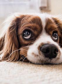 Kilka rzeczy, o których się nie myśli przed adopcją psa, a powinno