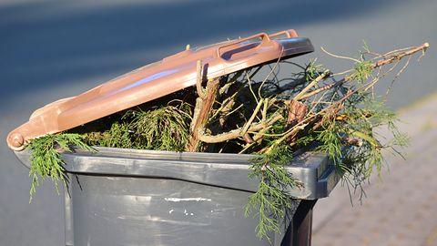 Eco Harmonogram – sprawdź w smartfonie, kiedy w twoim mieście wywożą śmieci