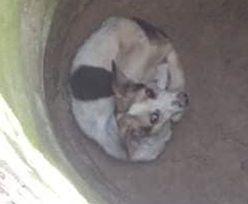 Biedny pies chciał przegryźć beton. Walczył o życie wiele dni. Dramat w łódzkim