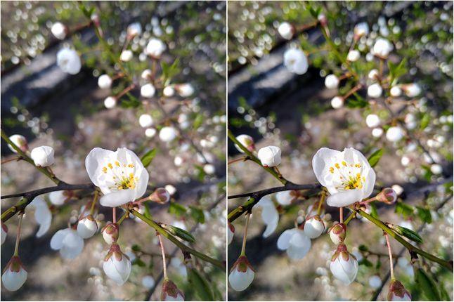Subtelna różnica w jakości. Zdjęcie po lewej to oryginał, po prawej po poprawce Asystenta z aplikacji Zdjęcia.