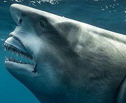 Kogoś wam przypomina? Zdjęcie rekina hitem mediów społecznościowych