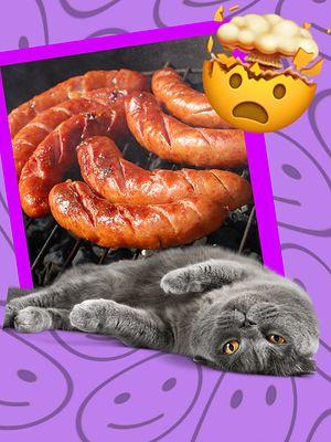 """Mięso z kota od """"Kociego smakosza"""" to coś więcej niż posiłek"""